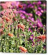 Flowerbed With Michaelmas Daisies Canvas Print