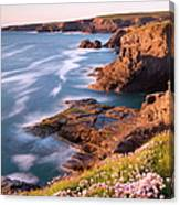 Flowering Sea Thrift Armeria Maritima Canvas Print