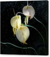 Flowerography Canvas Print