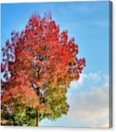 Foliage In Flanders Canvas Print