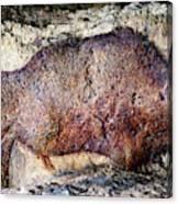 Font De Gaume Bison Canvas Print