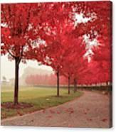 Forest Park Maple Corridor Canvas Print