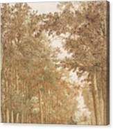 Forest Road Wi  Canvas Print