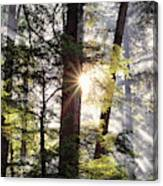 Forest Sunrise Canvas Print