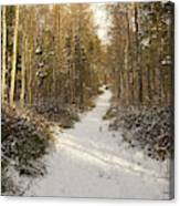 Forest Track In Winter Canvas Print