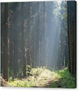 Forrest And Sun Canvas Print