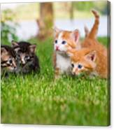 Four Little Kittens Playing In Garden Canvas Print