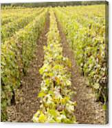 French Vineyards Of The Champagne Region Canvas Print