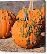 Fresh Butternut Pumpkins Canvas Print