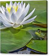 Frog And Lily Canvas Print