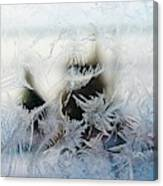 Frost From Canada Canvas Print