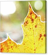 Frost On Autumn Leaf, Detail Canvas Print