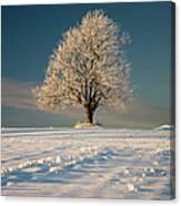 Frosty Oak Tree Canvas Print
