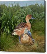Fulvous Whistling Ducks  Canvas Print