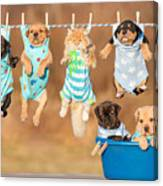 Funny Group Of American Staffordshire Canvas Print
