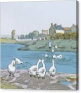 Geese By The River Loing 04 Canvas Print