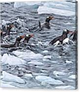 Gentoo Penguins By Alan M Hunt Canvas Print