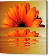 Gerbera Flower As Rising Sun Canvas Print