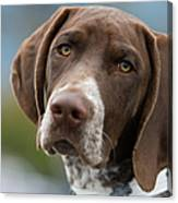 German Shorthair Pointer With Building Canvas Print