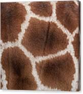 Giraffes Skin Texture Canvas Print