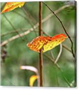 Gold Leaves And Branches Canvas Print