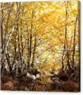 Golden Autumn Light Canvas Print