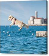 Golden Retriever Dog Jumping Into Sea Canvas Print