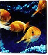 Goldfish In Fish Tank Canvas Print