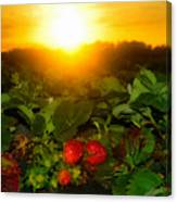 Good Morning Strawberries Canvas Print