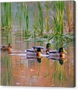 Got My Ducks In A Row Canvas Print