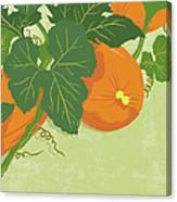 Graphic Illustration Of Pumpkins Canvas Print