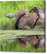 Great Blue Heron And Boulder Canvas Print
