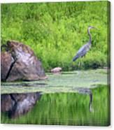 Great Blue Heron Fishing Canvas Print