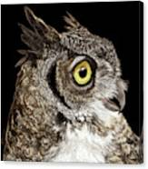Great-horned Owl Canvas Print