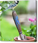 Great Tit Standing On A Garden Trowel  Canvas Print