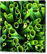 Green Onions Canvas Print