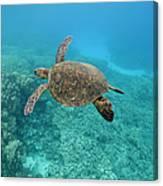 Green Sea Turtle, Big Island, Hawaii Canvas Print