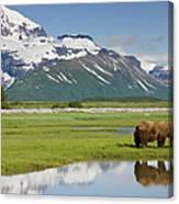 Grizzly Bear, Katmai National Park Canvas Print