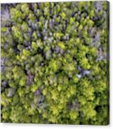 Grove Of Pines Aerial Canvas Print