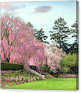 Weeping Cherry And Tulips Canvas Print