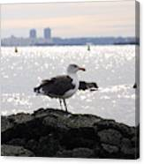 Gull Isle II Canvas Print