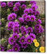 Hedgehog Cactus And Yellow Daisies Canvas Print