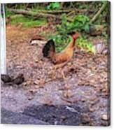 He'eia Kea Chickens Canvas Print