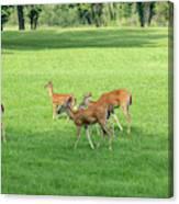 Herd Of Deer Canvas Print