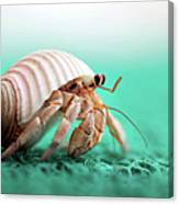Hermit Crab Running Canvas Print