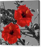 Hibiscus Selective Color Canvas Print