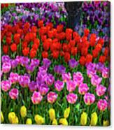 Hidden Garden Of Beautiful Tulips Canvas Print