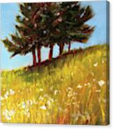 Hillside Evergreens Canvas Print