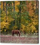 Horse In Fall Canvas Print