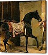 Horse Leaving A Stable Canvas Print